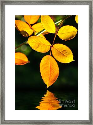 Leafs Over Water Framed Print by Carlos Caetano