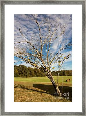 Leaning Tree - Natchez Trace Framed Print by Debra Martz