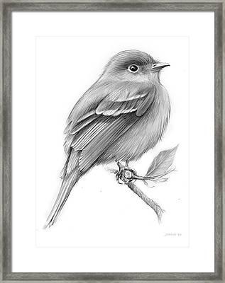 Least Flycatcher Framed Print by Greg Joens