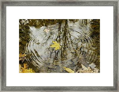 Leaves And Water Framed Print by Andrew McElvery