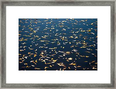 Leaves O' Plenty Framed Print by Todd Klassy