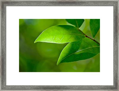 Leaves Of Green Framed Print by Az Jackson