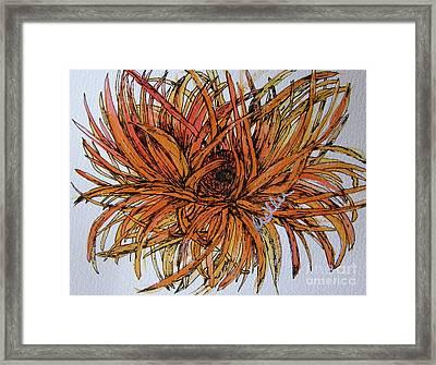 Leggy Gerber Framed Print by Marcia Weller-Wenbert