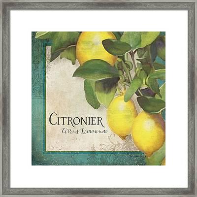 Lemon Tree - Citronier Citrus Limonum Framed Print by Audrey Jeanne Roberts
