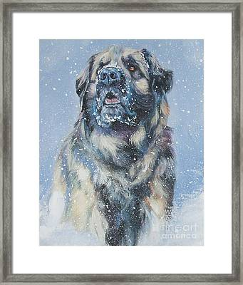 Leonberger In Snow Framed Print by Lee Ann Shepard