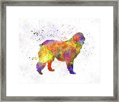 Leonberger In Watercolor Framed Print by Pablo Romero