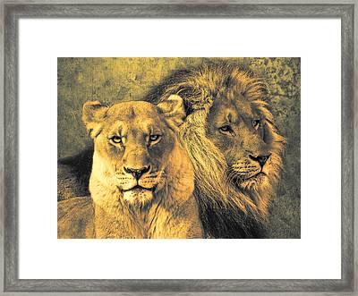 Leones Framed Print by Joachim G Pinkawa