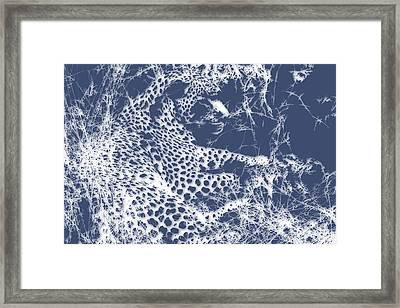 Leopard 2 Framed Print by Joe Hamilton
