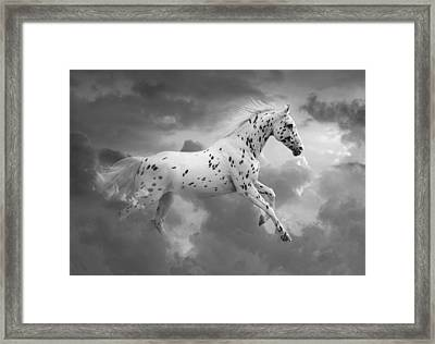 Leopard Appaloosa Cloud Runner Framed Print by Renee Forth-Fukumoto