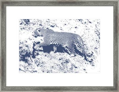 Leopard5 Framed Print by Joe Hamilton