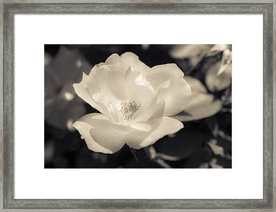 Let Me Love You Framed Print by Christi Kraft