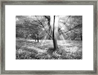 Let There Be Light Framed Print by Debra and Dave Vanderlaan