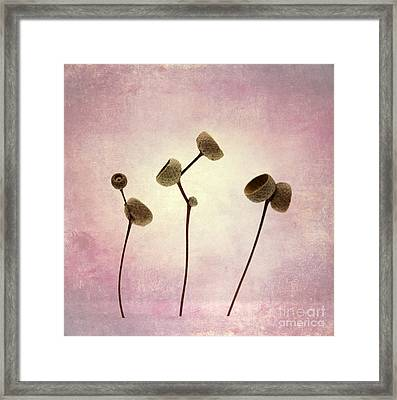 Lets Dance O0o Framed Print by SK Pfphotography