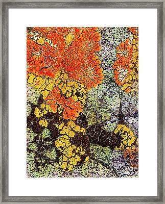 Lichen Palette Framed Print by Jean Noren