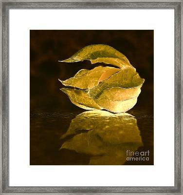 Licht Framed Print by SK Pfphotography