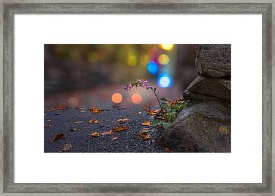Life Finds A Way Framed Print by Mary Almond