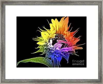 Life Is Like A Rainbow ... Framed Print by Gwyn Newcombe