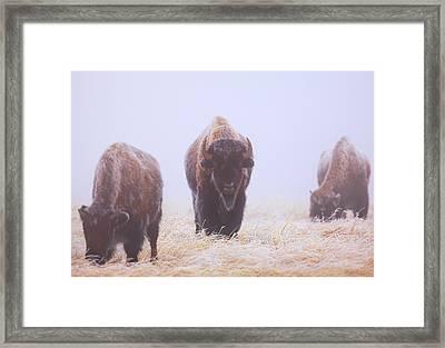 Buffalo Framed Print featuring the photograph Life Must Go On by Kadek Susanto