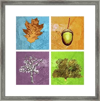 Life Of An Oak Tree Framed Print by Mary Ogle