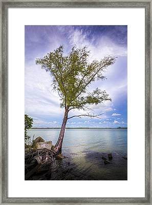 Life On The Edge Framed Print by Marvin Spates