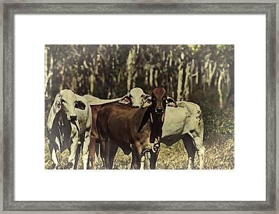 Life On The Farm V3 Framed Print by Douglas Barnard
