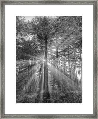 Light Framed Print by Naman Imagery