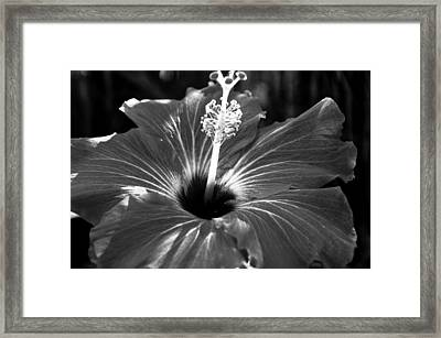 Light Framed Print by Melissa  Riggs