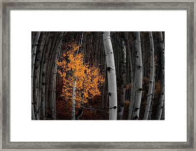 Light Of The Forest Framed Print by Darren White