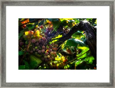 Light On The Fruit Framed Print by Greg Mimbs