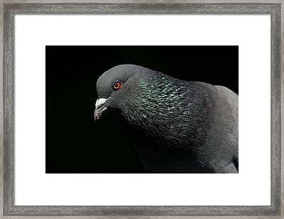 Light Rail Pigeon  Framed Print by Andrew Johnson