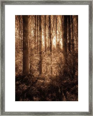 Light Trough The Forest Framed Print by Wim Lanclus