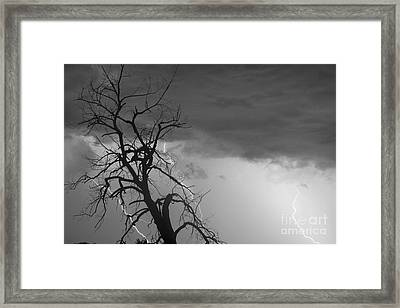Lightning Tree Silhouette 38 Black And White Framed Print by James BO  Insogna