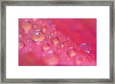 ...like A Dream Framed Print by Melanie Moraga