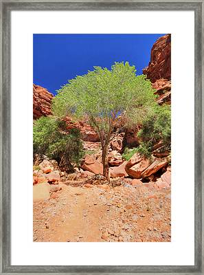 Like A Tree - Keep Growing Framed Print by Lori Deiter