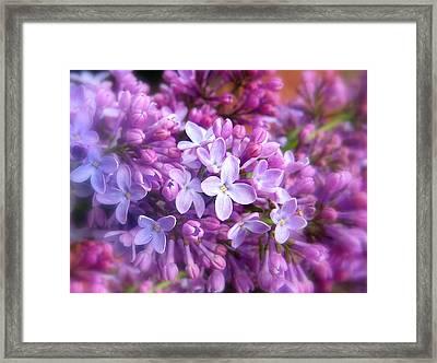 Lilac Framed Print by Jessica Jenney