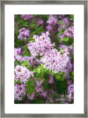 Lilac Lovelies Framed Print by A New Focus Photography