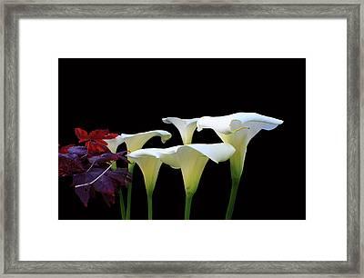 Lilies In Spring Framed Print by Aidan Moran
