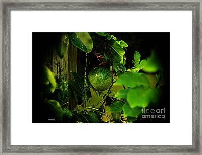 Lilikoi Vine 3 Framed Print by Cheryl Young