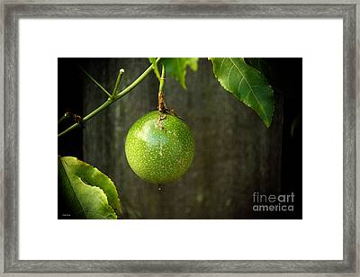 Lilikoi Vine Framed Print by Cheryl Young