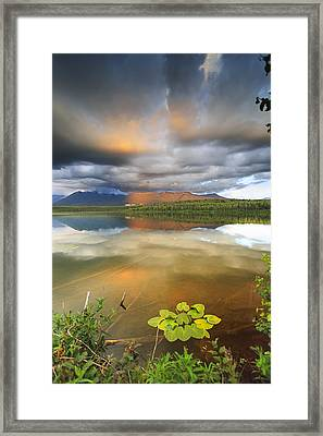 Lilly Framed Print by Ed Boudreau