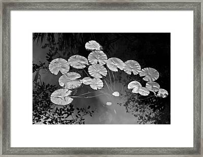 Lilly Pads Fakahtchee Strand Framed Print by Jim Dohms