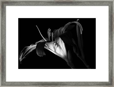Lily Ambiance Monochrome Framed Print by Donna Kennedy