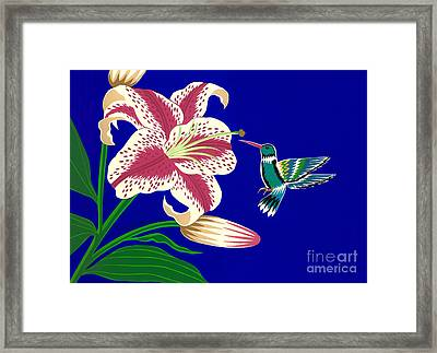 Lily And Hummingbird Framed Print by Lucyna A M Green
