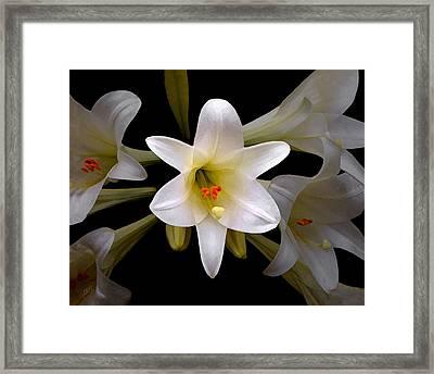 Lily Framed Print by Ben and Raisa Gertsberg