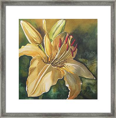 Lily In Yellow Framed Print by Alfred Ng