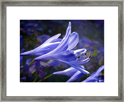 Lily Of The Nile Framed Print by Ellen Cotton