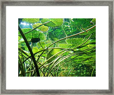 Lily Pads I Framed Print by Anna Villarreal Garbis