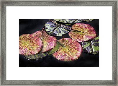 Lily Pond Jewels Afloat Framed Print by Jessica Jenney