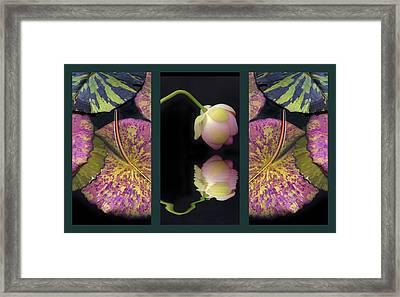 Lily Pond Triptych Framed Print by Jessica Jenney