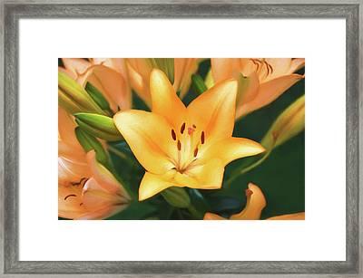 Lily Framed Print by Steven  Michael
